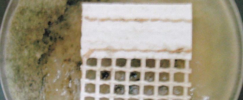 抗菌・防カビ処理